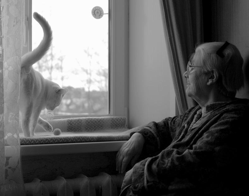 Про Бабушку и её Кота. Бабушка Кот Любовь