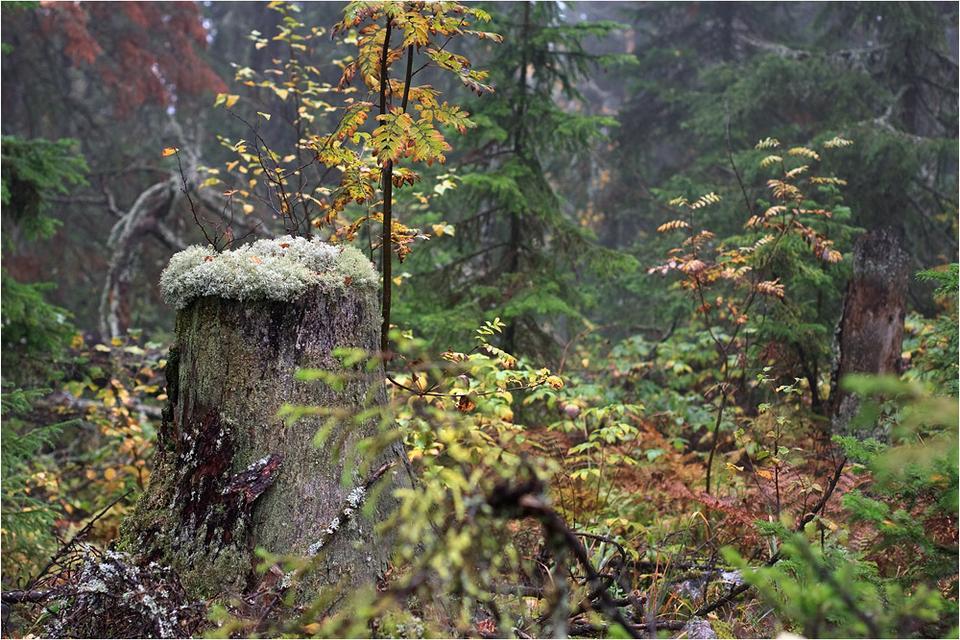 Осень в лесу хребет Малый Ямантау Южный Урал Башкирия