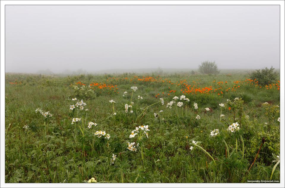 Утренняя роса Забайкалье