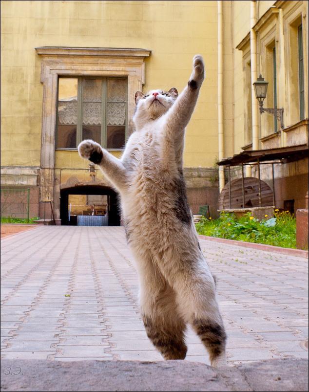 Не улетай! Эрмитажный дворик кот безымянный прямоходящий