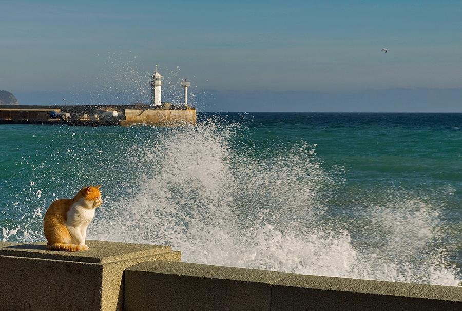 *** Коты море маяк Крым Ялта