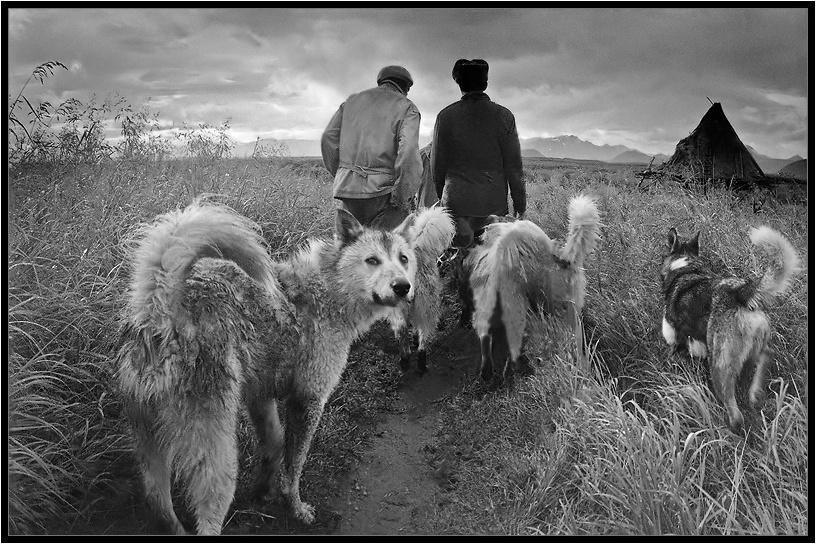 На охоту в тундру  Камчатка, охота, собаки