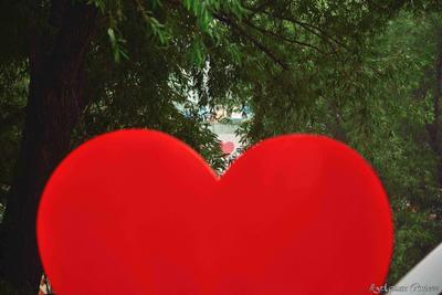 Сердце за сердцем стелла люблю город Курган лето смог всем городом