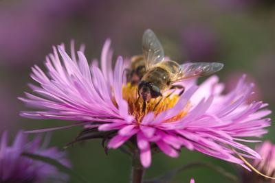 За работой Пчелы