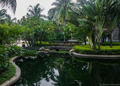 Мостик через пруд Мостик Hilton Китай Хайнань пруд