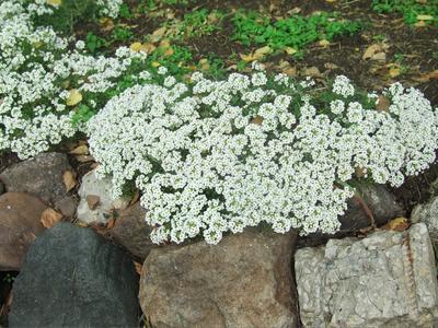 На камнях цветы парк прогулка