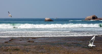 Океан шри ланка океан чайки