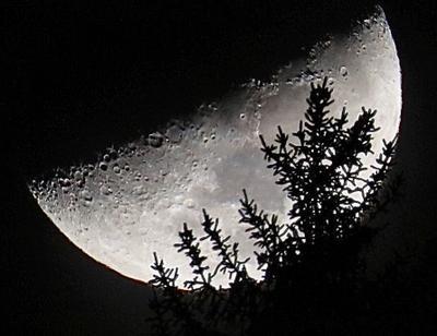 ***Луна 1 Луна лес пейзаж с луной Куршевель