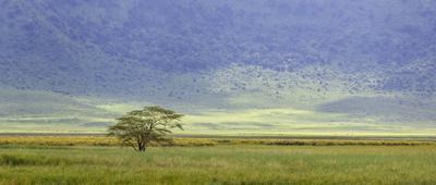 в Танзании дерево кратер Танзания