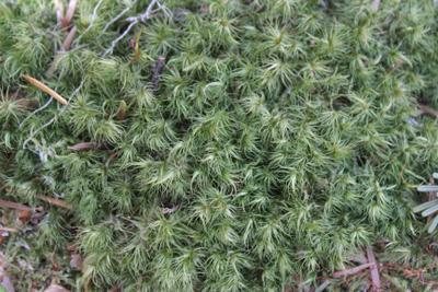 мох мох зелень свежесть травка