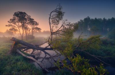 Канувшее ... владимирская область природа пейзаж май весна
