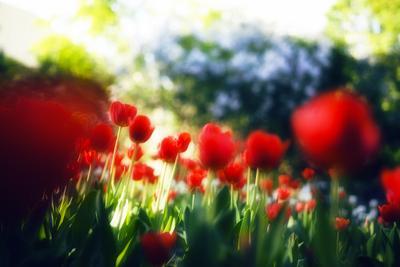 Краски мая цветы