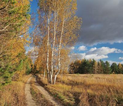 Такая осень стояла... пейзаж осень