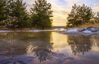 Первые во́ды весенние пейзаж природа зима вечер закат солнце заря сосны оттепель вода лужа снег
