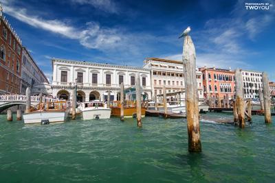 Венеция италия венеция чайка море отпуск релакс безмятежность