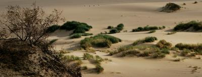 """В прибалтийской """"пустыне""""."""