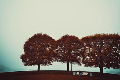 А вокруг Питер красота Питер осень скамейка Россия деревья люди природа город