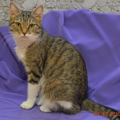 Фотомодель кошка