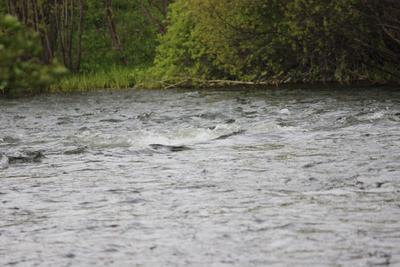 Река Базаиха