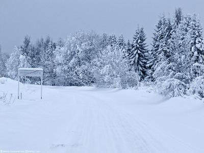 На пустой дороге... Карелия природа снег заморозки