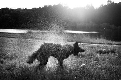 Собача собака
