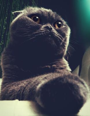 Осенний, серый Вальяж :) Кот животные серый бирюзовый голубой милость