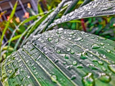 Лист после дождя Лист дождь утро