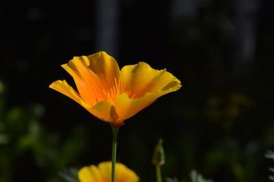 *** цветы макро nikon