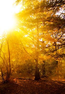 Сухая осень Осень лес солнце