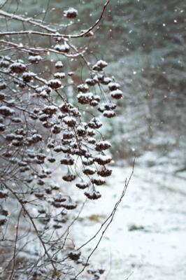 *** зима снег лес природа