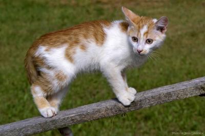 Что? Опять за Мухтара полосу препятствий проходить!? котенок кошачьи домашние животные юмор полоса