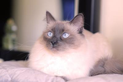 полнолуние кот