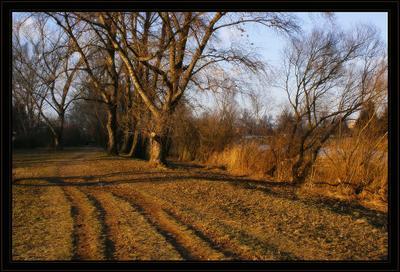 солнечно в декабре дорожка, деревья, пруд, солнечно, лекабрь