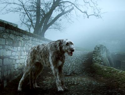 Lost in Belgrade Digital Photo Art Irish Wolf Dog Show Eltons Fantasies