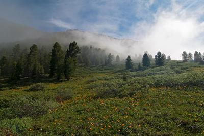 Тихое саянское утро Утро Саяны жарки туман