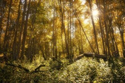 Лес в сентябре деревья листья осень