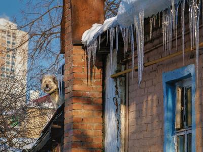 Добродушный страж старый дом улица вечер собака
