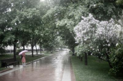 Запах дождя и сирени. сирень дождь