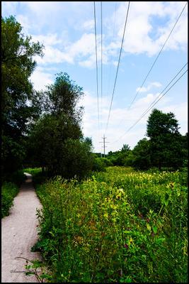 Наматываю мили на кардан иду я параллельно проводам ... Измайловский лес