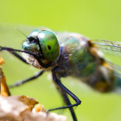Макро стрекозы макро насекомое глаз
