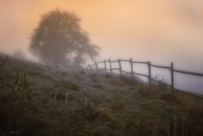 всплакнула инеем лебеда холм забор туман иней