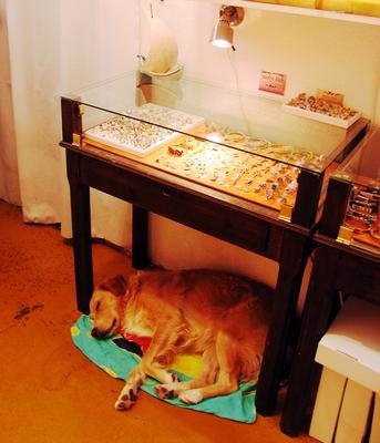 Солдат спит, служба идёт... Собака сон служба