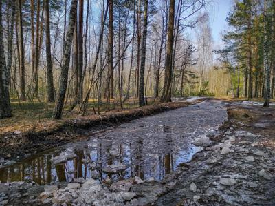 Весна идет - весне дорогу! ВЕсна трава небо облака деревья лужа лед март дорога