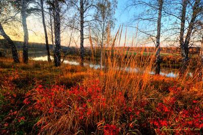 Листья шиповника в солнечных лучах пейзаж природа осень лето новосибирск лес облака фотообои