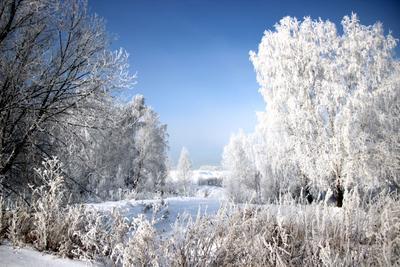 Одним белым цветом рисует зима Сибирь зима иней серебро снег деревья