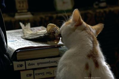Каждый грызет свой гранит кот кошачьи домашние животные таранка книги юмор