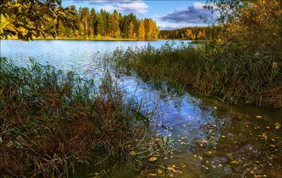 Кто же, осень, придумал тебя? Ты пришла незаметно и быстро.... Осень Истринское Водохранилище