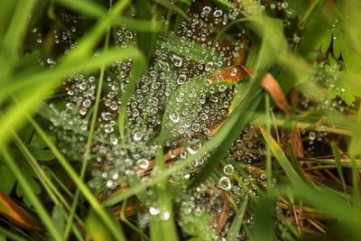 россыпь трава паутина капли роса россыпь бусины дождь