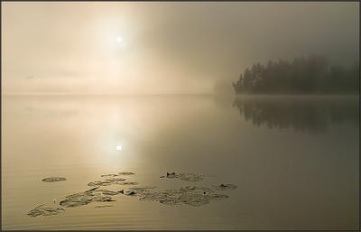 Impression. Le soleil levant. туман impression