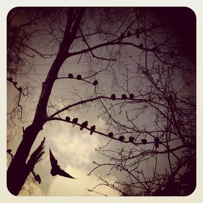 Earlybirds instagram